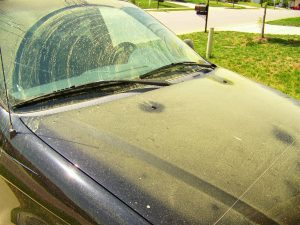Is It Safe To Paint Outside During Pollen Season?